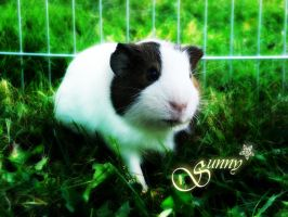 Guinea Pig Sunny Background by oOBrushstrokeOo