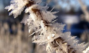 Snow Crystals by Lhox