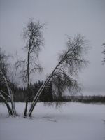 fune-stock_winter_trees by Fune-Stock