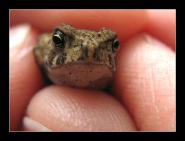 Toad by MichelleMarie
