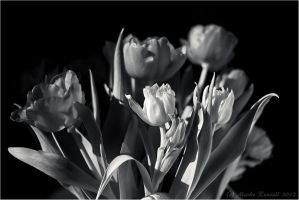 Colorless Tulips by Rempstaar