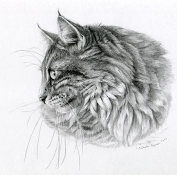 Norwegian forest cat by sschukina