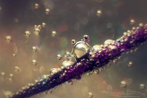 Bubble-frog by mary-petroff
