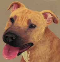 American Pit Bull Terrier by thelunacy-fringe