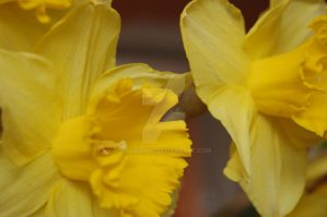 Narcis 4 by JulieDing