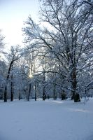 Starry winter sun in trees by steppelandstock