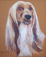 Afghan Hound by Orion1950