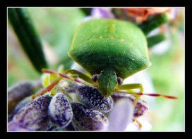 Bug by floflo by Insect-Lovers-Club