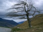 Anorexic tree by libbysharf