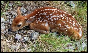 Bambi Hiding by minirails