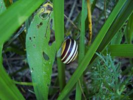 Snail On A Blade Of Grass by Gr8-Gatensby