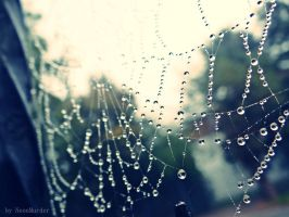 Spider's web by NeonMurder