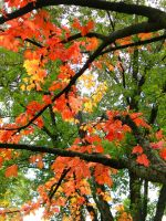 Turning to Fall by TropicalxLondon