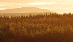 Gortnamoyagh Forest - sunset 2 by younghappy