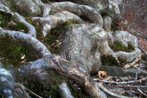 Mossy Tree Roots by Lovely-LaceyAnn-Art