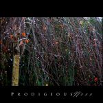 Prodigiousness 03 by GregorKerle