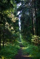 In the woods by Henrikson