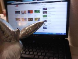 Silver loves youtube by jrc1120