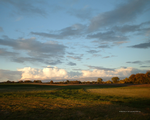 Field, Trees and Clouds by Norski