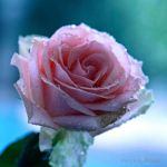 A Crying in a Morning Dew by WhiteBook
