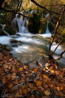 autumn leaves by ivancoric