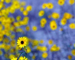 Yellow and Blue by 0149