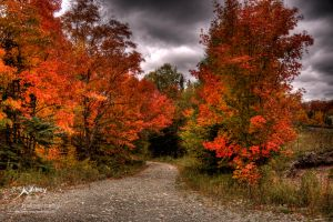 HDR Autumn Trail 2 by Nebey