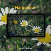 Marguerite by Momez