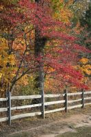 Dogwood in Fall by FroglovinPhotogirl