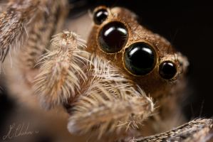 Jumper Eyes by mchahine