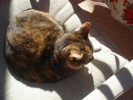 Curled up on a chair by cali-cat
