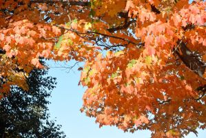 2014 Natural Autumn Color 27 by Miss-Tbones