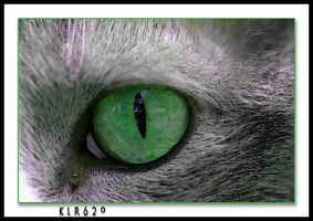 Emerald Eye by KLR620