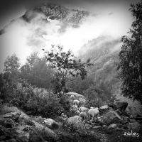 Les moutons by rdalpes