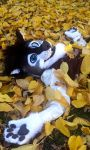 Play in the Leaves by FrodoWo1f