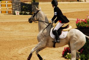 Rolex 08 Show Jumping1 by zeeplease