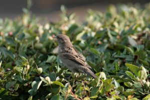 Birds in Bushes 12 by sd-stock
