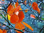 Halloween Rain -enhanced- by IoannisCleary