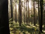 Forest by Butterbee
