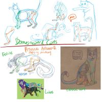 Domesticated Cats + Felines by craesin