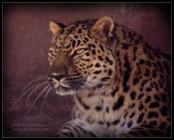 Amur Leopard Portrait by Karl-B