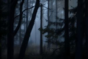 Spooky woods by henkeliduu