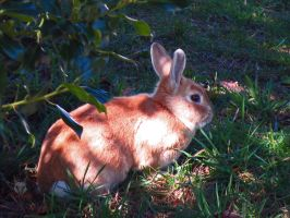 Rabbit In The Shade by wolfwings1