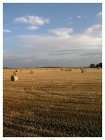 Harvest is in by gio