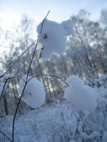 Snowy woods No.8 by redrockstock