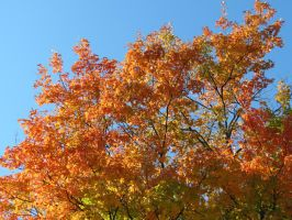 Bright Fall Day by Michies-Photographyy