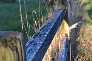 Fence by Eehli