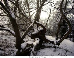 Winter Wonderland 05 by AnitaJoy-Stock