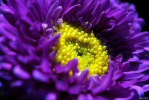 Purple by Doumanis