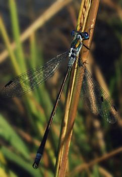 Dragonfly by B-Side-Of-D